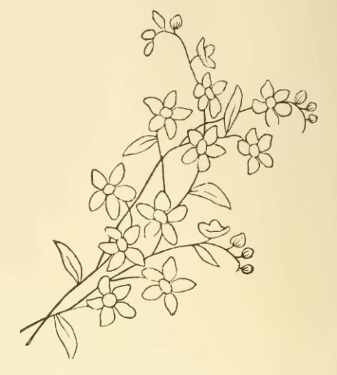 Disegno per il ricamo del furoshiki -2-